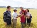 cosecha-arroz-guanica-agp-15